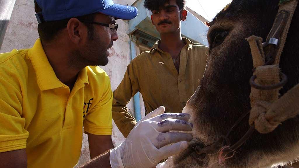karachi_donkeys_feature